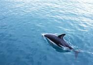 鲸鱼图片_28张