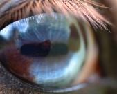 马的眼睛特写图片_16张