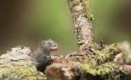 可爱的小老鼠图片_11张