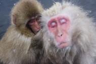 可爱猴子图片_13张
