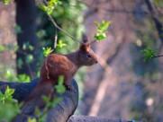 可爱的松鼠图片_9张