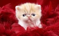 可爱小宠物的可爱瞬间图片_24张