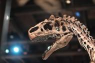 恐龙化石图片_11张