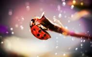 瓢虫图片_14张
