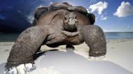 陆栖性动物乌龟图片_11张