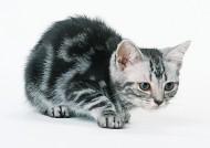 宠物猫图片_26张