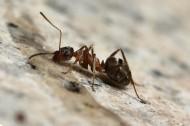 可爱蚂蚁图片_20张