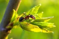 蚂蚁高清图片_15张