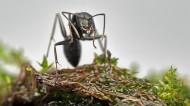 蚂蚁图片_12张