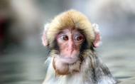 猴子图片_9张