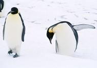 可爱企鹅图片_37张