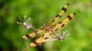 蜻蜓图片 _15张