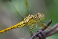微距蜻蜓图片_9张