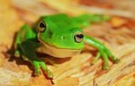形态各异的青蛙图片_13张