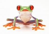 青蛙图片_70张