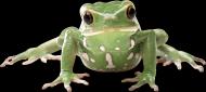 青蛙透明背景PNG图片_17张