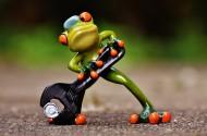 青蛙玩具图片_11张