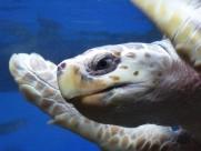 海龟图片_19张