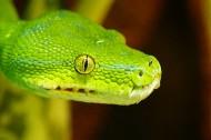 冰冷危险的蛇图片_14张