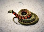 一条五彩斑斓的蛇图片_16张