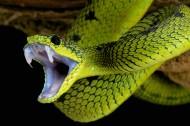 蛇类图片_7张