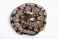蛇图片_8张