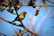树枝上的小鸟图片_8张