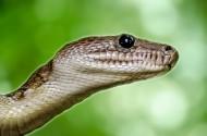 蛇图片_13张