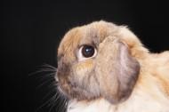 兔子特写图片_23张