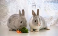 可爱小兔子图片_28张