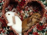 兔子图片_25张