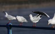文静的海鸥图片_6张