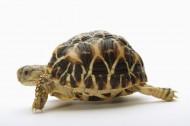 小乌龟图片_6张