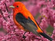 可爱小鸟图片_20张