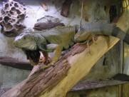蜥蜴图片_21张