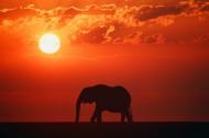野生大象图片_11张