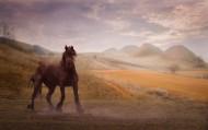 一匹站着的马图片_13张