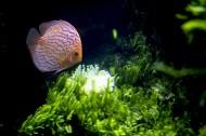 水族馆里的水生动植物图片_11张