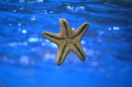 不同的海星图片_10张