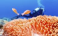 海底美丽珊瑚图片_11张