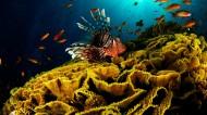海底珊瑚礁图片_11张