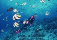 海底潜水图片_44张