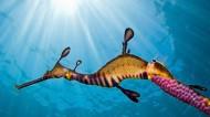 海底世界海洋生物图片_10张