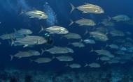海底世界图片_20张