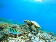 寿命较长的海龟图片_10张