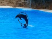 海豚表演图片_17张