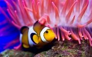 海洋海葵鱼的图片_11张