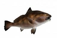 各种海鱼特写图片_14张