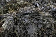海藻图片_8张