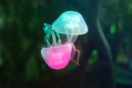 美丽的水母图片_21张